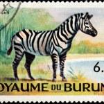 Постер, плакат: Zebra Stamp