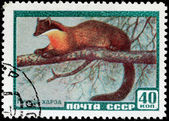 Marten Stamp — Stock Photo