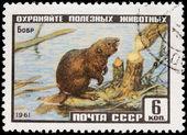 Beaver Stamp — Stock Photo