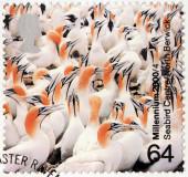 Seabirds Colony — Stock Photo
