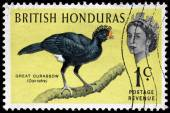 Great Curassow Stamp — Stock Photo