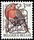 Robin Stamp — Stock Photo