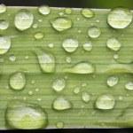 Dew Drops — Stock Photo #78810554