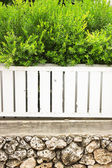Bushes with green leaves in a white linear steel white metal fence — Stock Photo