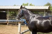 Коричневая лошадь — Стоковое фото