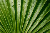 Wet Vivid Green Palm Leaf — Stock Photo