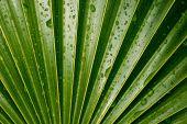 Wet Vivid Green Palm Leaf — Stock Photo