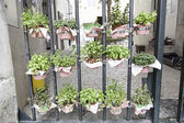 Potted plants in a street — Stock Photo