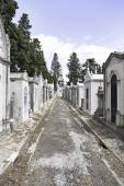 Old cemetery in the city of Lisbon — Stock Photo