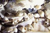 Micro Photo of Sea Shell Sand — Stockfoto