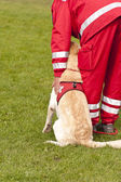 Training of a Rescue Dog Squadron — Stock Photo