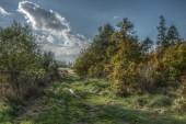Photo of beautiful autumn nature — Stock Photo