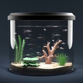 Fish aquarium — Stock Photo
