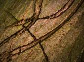 Abstract cracks in the bark — Stock Photo