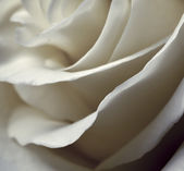 Blurred petals of roses — Stock Photo