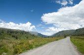 Beautiful Roadway — Stock Photo