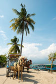 Horse and Cart on Gili Air, West Nusa Tenggara, Indonesia — Stock Photo