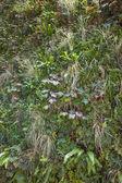 Green wall - vertical garden — ストック写真