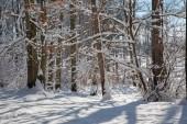 Winter forest in Little Carpathian hills - Slovakia — Stock Photo