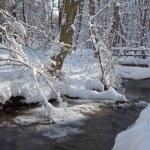 Creek in winter forest in Little Carpathian hills - Slovakia — Stock Photo #64530763