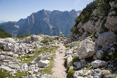 Julian alps - knee timber and the landscape — Stock Photo