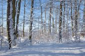 Zimowe buczyny w mało Karpackich wzgórz - Słowacja — Zdjęcie stockowe