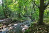 Riacho na floresta de pequenos Cárpatos - Eslováquia — Fotografia Stock