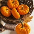 Fresh small pumpkins in the basket — Stock Photo #55105903