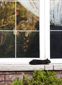 Cat and squirrel — Zdjęcie stockowe