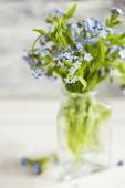 Bouquet of blue wild forget-me-not flowers. — Stock Photo