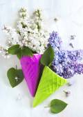 Beautiful purple and white lilac flowers — Stock Photo