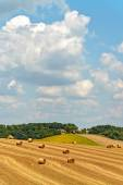 Newly harvested hay bales in an agricultural field — Foto de Stock