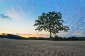 Tree at Hay Field During Sunset — Stock Photo