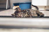 Tired little kitten — Stockfoto