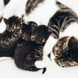 Mother cat nursing her babies — ストック写真 #72500191