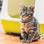 Pretty little striped tabby kitten — Stock Photo #72670161