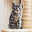 Cute little tabby kitten — Stock Photo #72670179