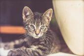 Alert kitten peering through glass — Stock Photo