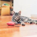 Grey tabby cat with pretty  markings — Stock Photo #77062361