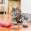 Grey tabby cat with   striped markings — Stock Photo #77286093