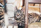 Striped tabby cat — Stock Photo