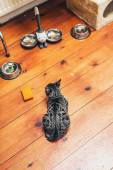 Hungry kitty lying waiting for its food — 图库照片
