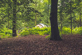 Tent Standing in Forest — Stock Photo