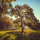 Raios de sol da manhã no parque outono — Fotografia Stock