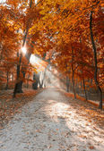 Autumn city park with sunbeams — Stock Photo