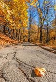 Autumn city park — Zdjęcie stockowe