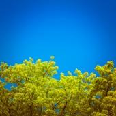 Ahşap ve mavi gök yeşil dallar — Stok fotoğraf