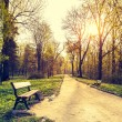Beautiful spring landscape. Bench and footpath in morning park — Stock Photo #72786053