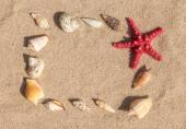 Sjöstjärnor och havet skal med sand som bakgrund — Stockfoto