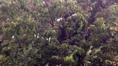 Zware regen, winderig weer — Stockvideo